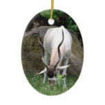 Addax Ornament