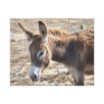 Adorable Donkey Canvas Print