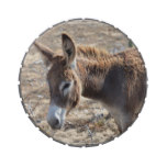Adorable Donkey Jelly Belly Candy Tin