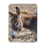 Adorable Donkey Magnet
