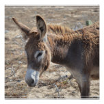 Adorable Donkey Poster
