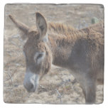Adorable Donkey Stone Coaster