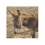 Adorable Donkey Wood Print