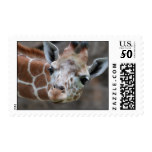 Adorable Giraffe Postage Stamp