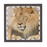 Adorable Lion Jewelry Box