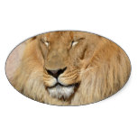 Adorable Lion Oval Sticker