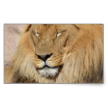 Adorable Lion Rectangular Sticker