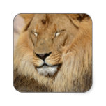 Adorable Lion Square Sticker