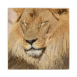 Adorable Lion Wood Coaster