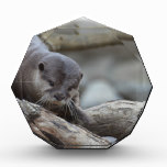 Adorable Otter Acrylic Award