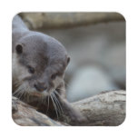 Adorable Otter Coaster
