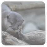 Adorable Otter Square Paper Coaster