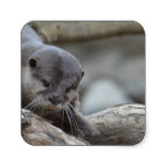 Adorable Otter Square Sticker