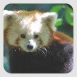 Adorable Red Panda Stickers
