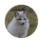 Adorable White Fox Candy Tins