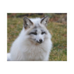 Adorable White Fox Canvas Print