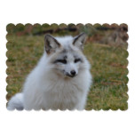 Adorable White Fox Card