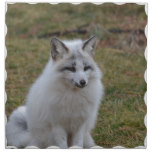 Adorable White Fox Cloth Napkin