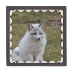 Adorable White Fox Gift Box