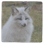 Adorable White Fox Stone Coaster