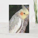 African Grey Parrot Greeting Card