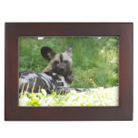 African Wild Dog Keepsake Box