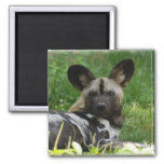 African Wild Dog Photo Magnet