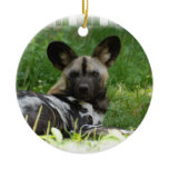 African Wild Dog Photo Ornament