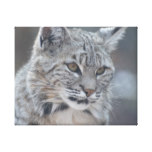 Amazing Bobcat Canvas Print