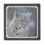 Amazing Bobcat Keepsake Box