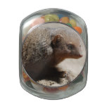 Amazing Dwarf Mongoose Glass Candy Jar
