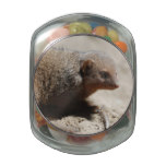 Amazing Dwarf Mongoose Glass Jar
