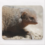 Amazing Dwarf Mongoose Mouse Pad