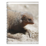 Amazing Dwarf Mongoose Notebook
