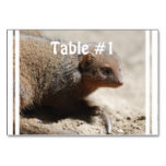 Amazing Dwarf Mongoose Table Number