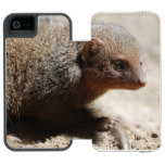 Amazing Dwarf Mongoose Wallet Case For iPhone SE/5/5s