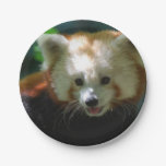 Amazing Red Panda Paper Plate