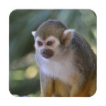 Amazing Squirrel Monkey Coaster