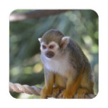 Amazing Squirrel Monkey Drink Coaster