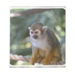 Amazing Squirrel Monkey Notepad