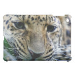 Amur Leopard  iPad Case