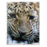 Amur Leopard Notebook