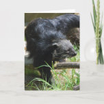 Asian Bearcat Greeting Card