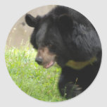 Asiatic Black Bear Stickers