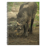 Babirusa  Notebook
