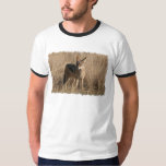 Baby Coyotes Men's T-Shirt