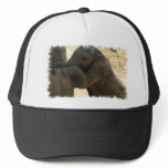 Baby Elephant Baseball Hat