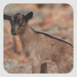 Baby Goat Square Sticker