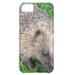 Baby Hedgehog iPhone 5C Cover