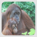 Baby Orangutan with Mother  Stickers